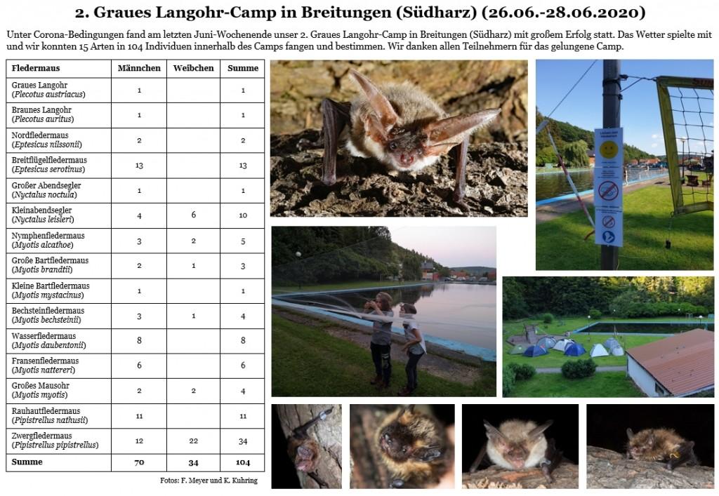 2.Graue Langohr-Camp_Homepage