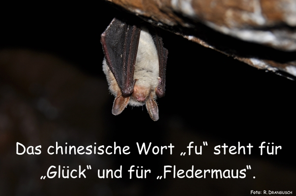 Fledermaussprichwort fu