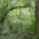 Habitat der Fransenfledermaus (Foto: B. Ohlendorf)