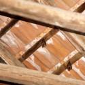 Hufeisennasen unter dem Dach