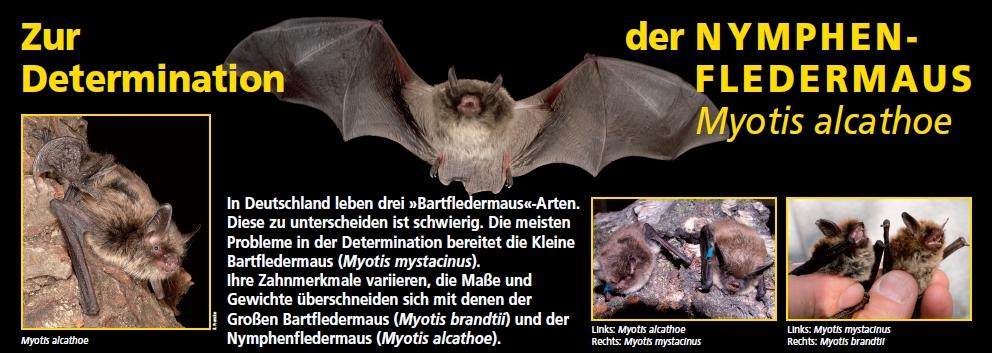 Deckblatt nymphe homepage