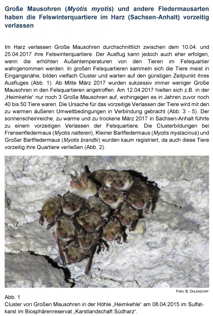 17 März Große Mausohren Seite 1 gesch