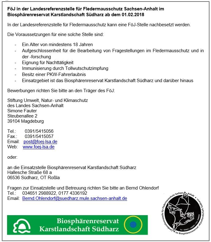 FöJ in der Landesreferenzstelle für Fledermausschutz Sachsen