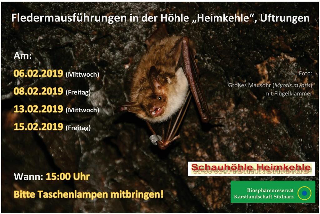 19 Fledermausführungen in der Heimkehle