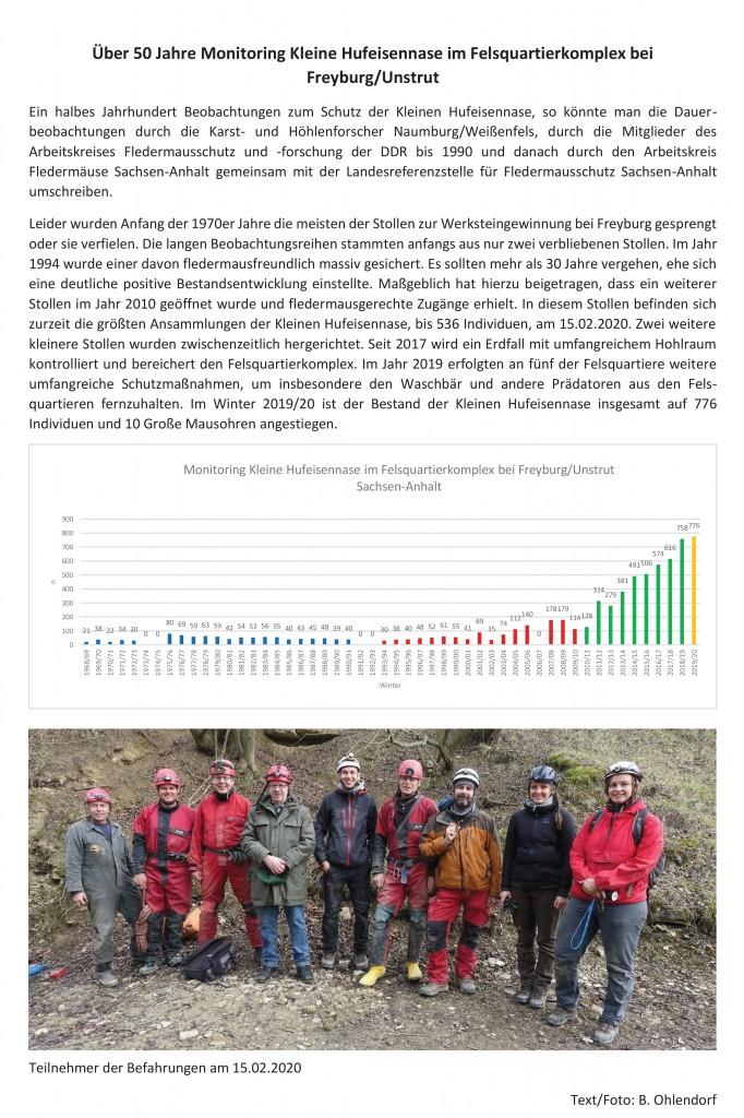 20 Über 50 Jahre Monitoring Kleine Hufeisennase im Felsquartierkomplex bei Freyburg