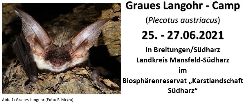 Homepage Graue Langohr