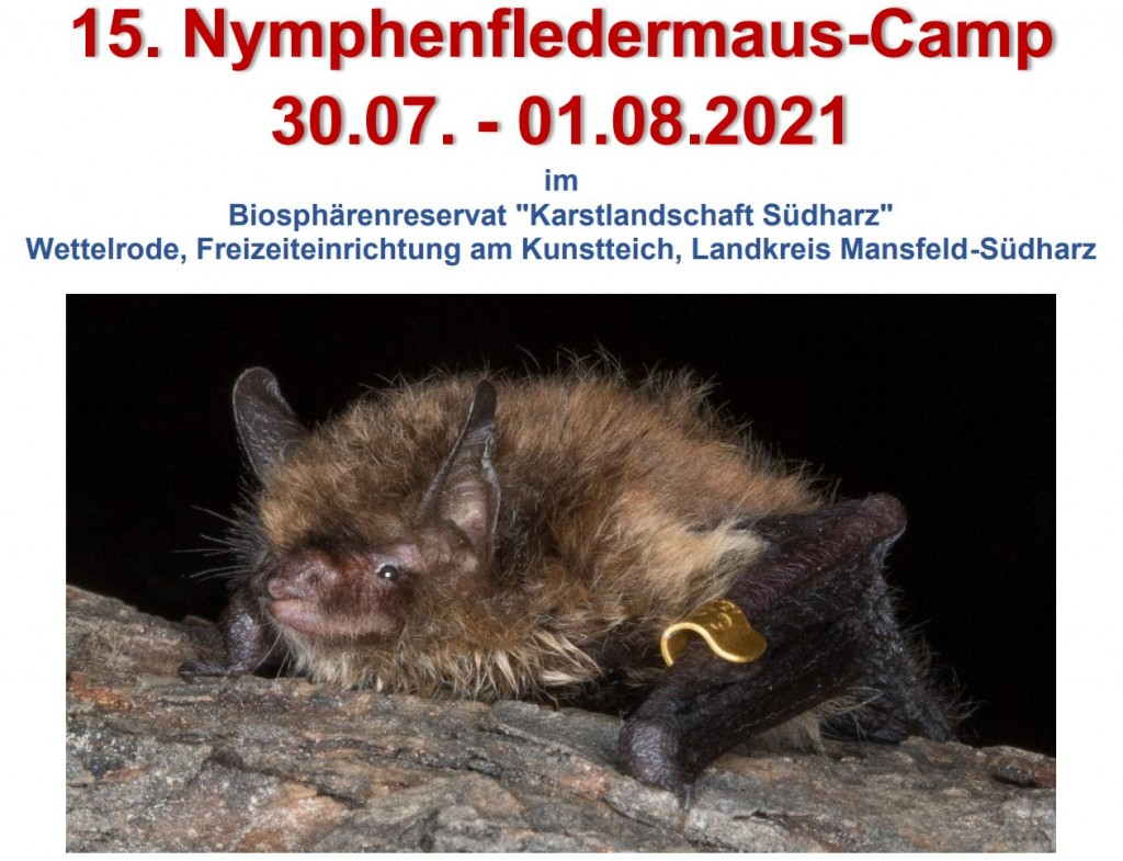Homepage nymphen-Camp